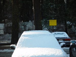 Snowy Car With Bear Sign